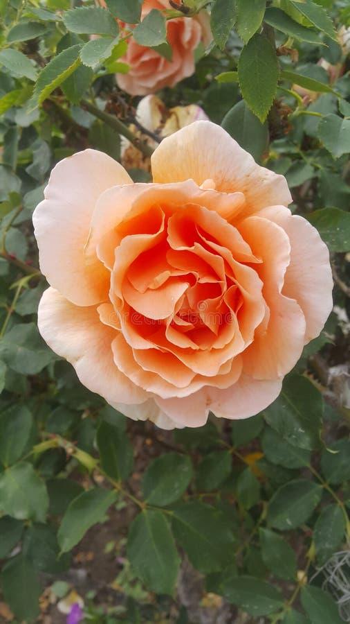 kwiat wibrujący obrazy stock
