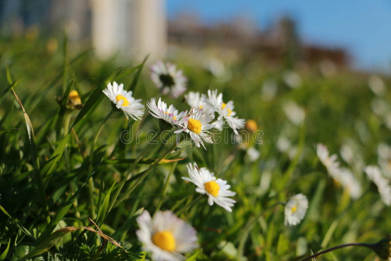 kwiat wiosny leśny white fotografia stock