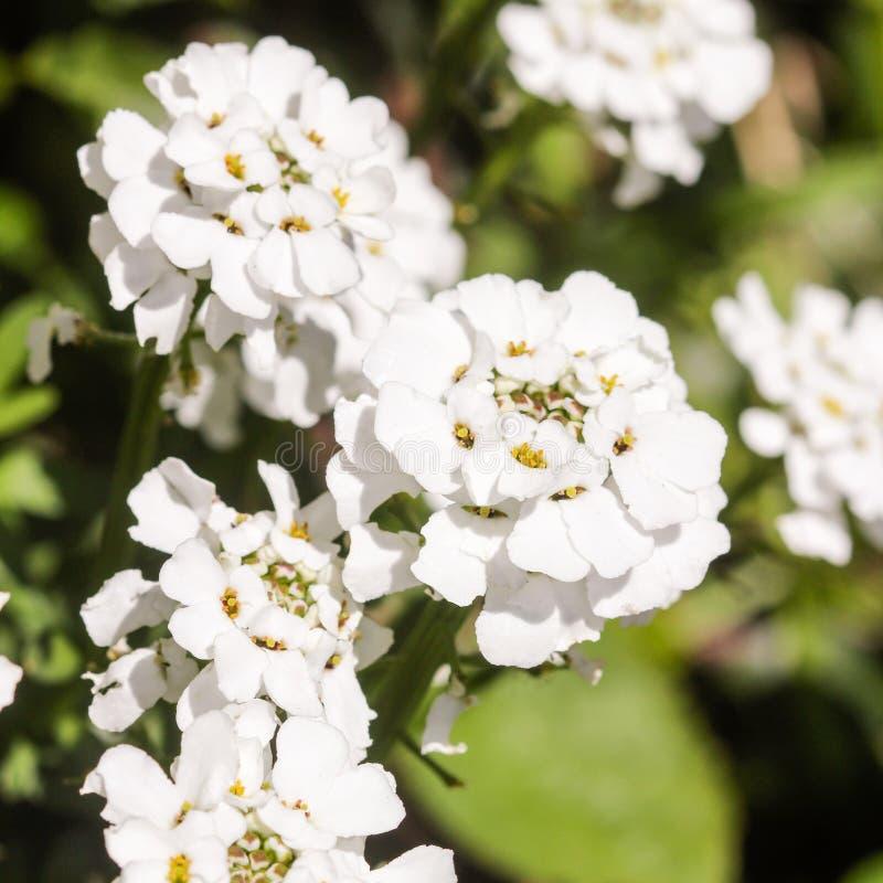 kwiat wiosny leśny white obrazy royalty free