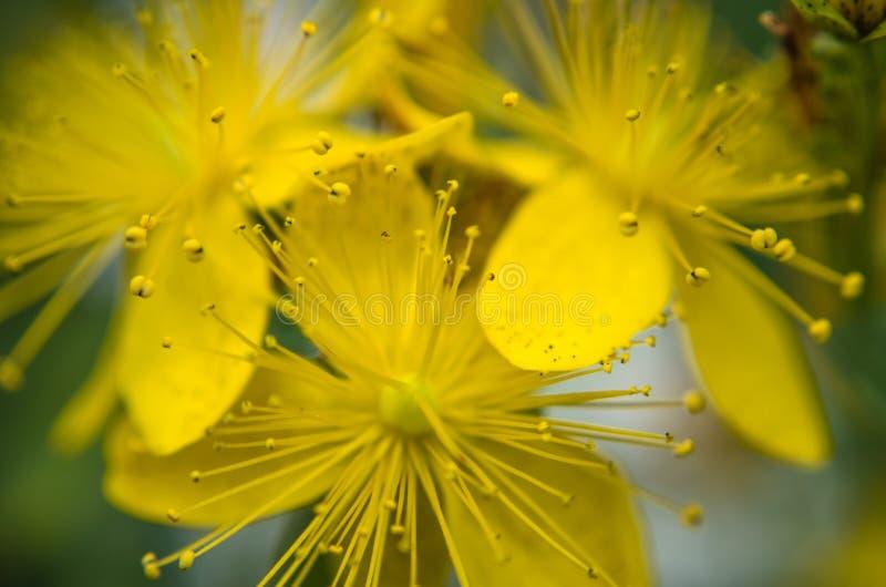 kwiat wiosny leśny white fotografia royalty free