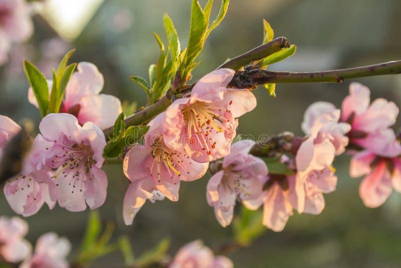 Kwiat wiosny rośliny ulotek makro- bokeh obraz stock