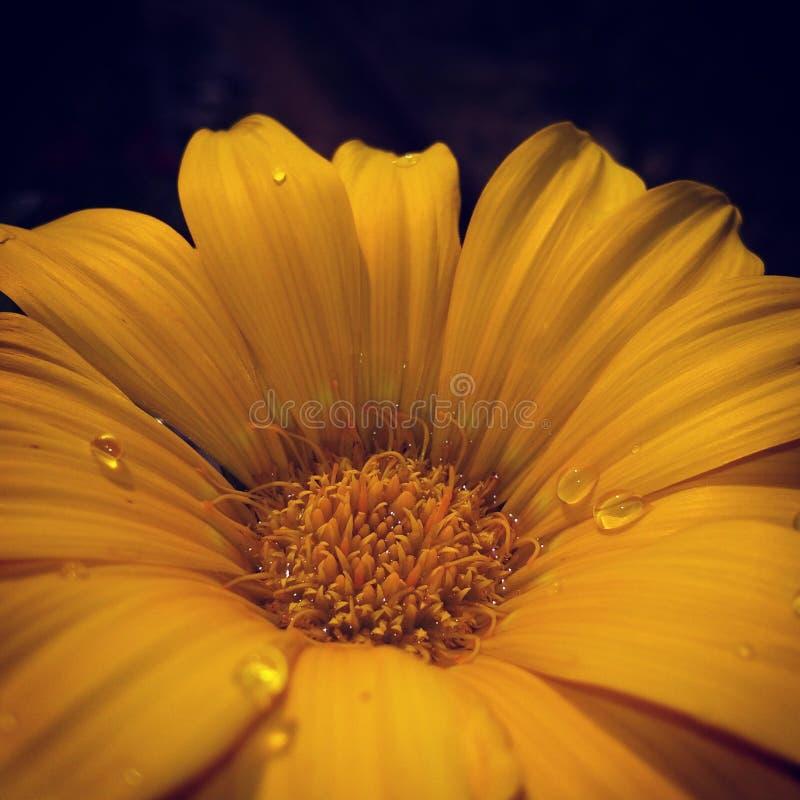 kwiat z deszcz kroplą fotografia stock