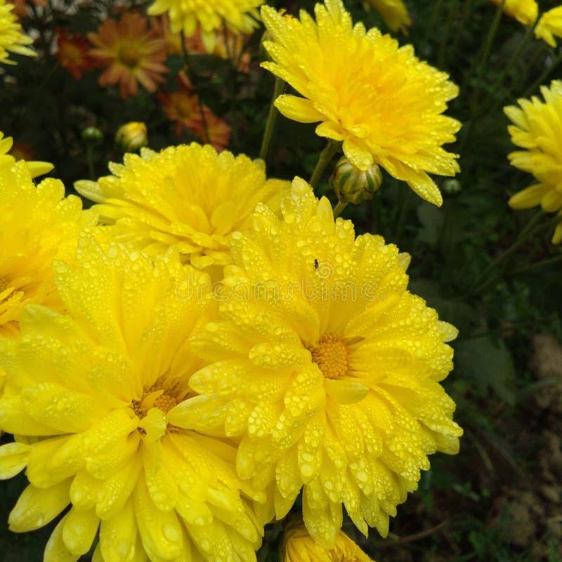 kwiat z deszcz kroplą zdjęcie royalty free