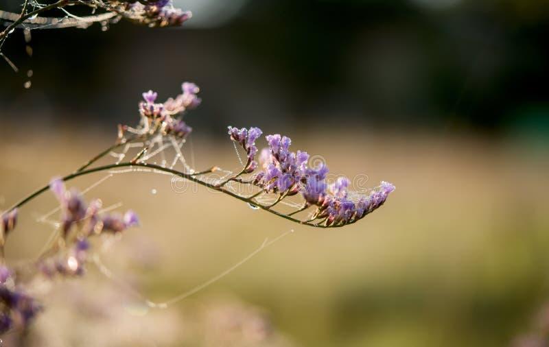 kwiat z pajęczyną obraz stock