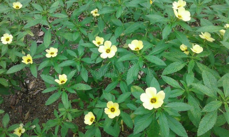 kwiat zieleń opuszczać kolor żółty obraz stock
