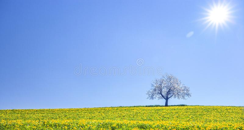 Kwiatonośna jabłoń w krajobrazie obrazy stock