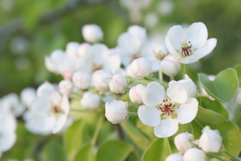 Kwiatonośna gałąź bonkrety zbliżenia abstrakta tło obrazy royalty free