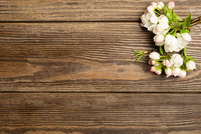 Kwiatonośna jabłoni gałąź na drewnianym tle przeciw t?a poj?cia kwiatu wiosna bia?y ? obraz stock