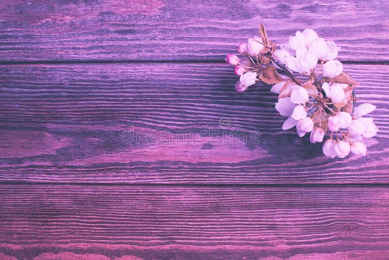 Kwiatonośna jabłoni gałąź na drewnianym tle przeciw t?a poj?cia kwiatu wiosna bia?y ? zdjęcie royalty free