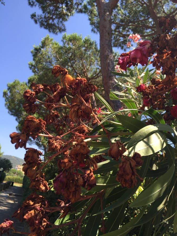 Kwiatonośna roślina obraz stock