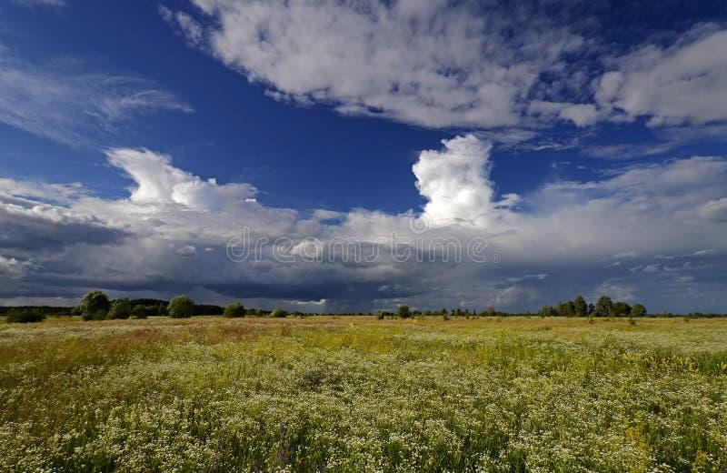 Kwiatonośna wodna łąka Lato obraz royalty free