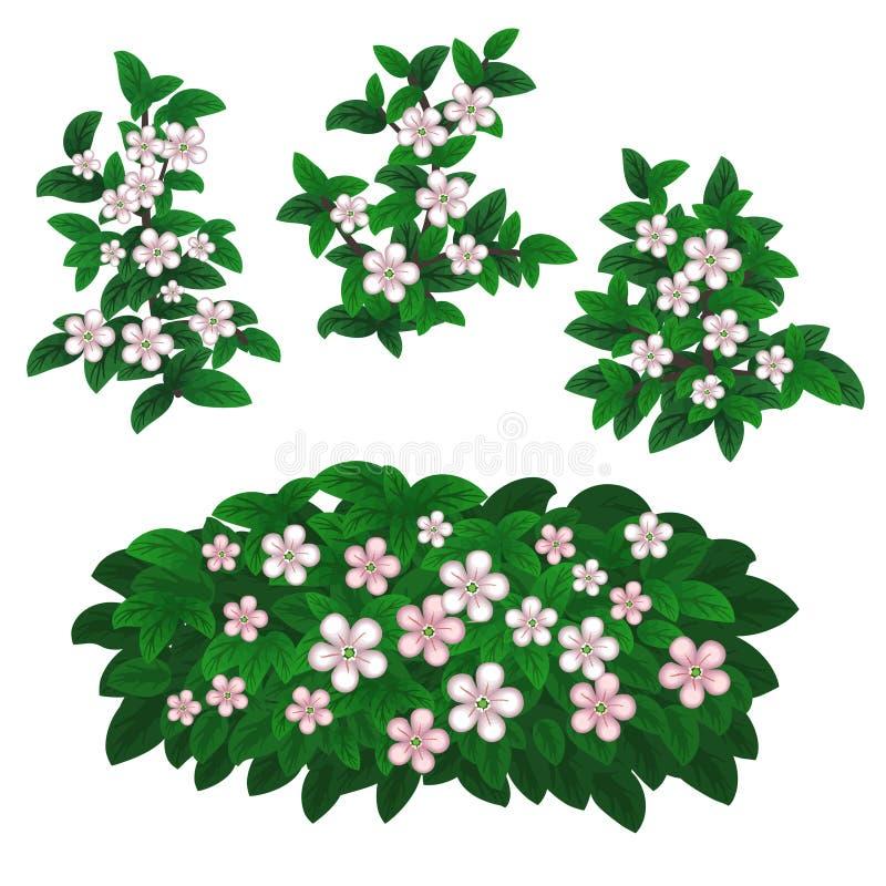 Kwiatonośne jagod rośliny ilustracji