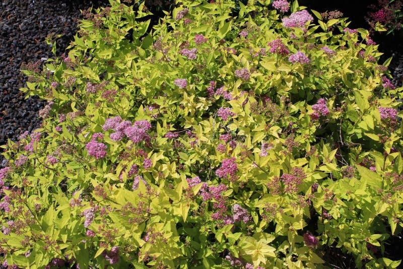 Kwiatonośnego drzewa zalążki zawierający w jajniku fotografia royalty free