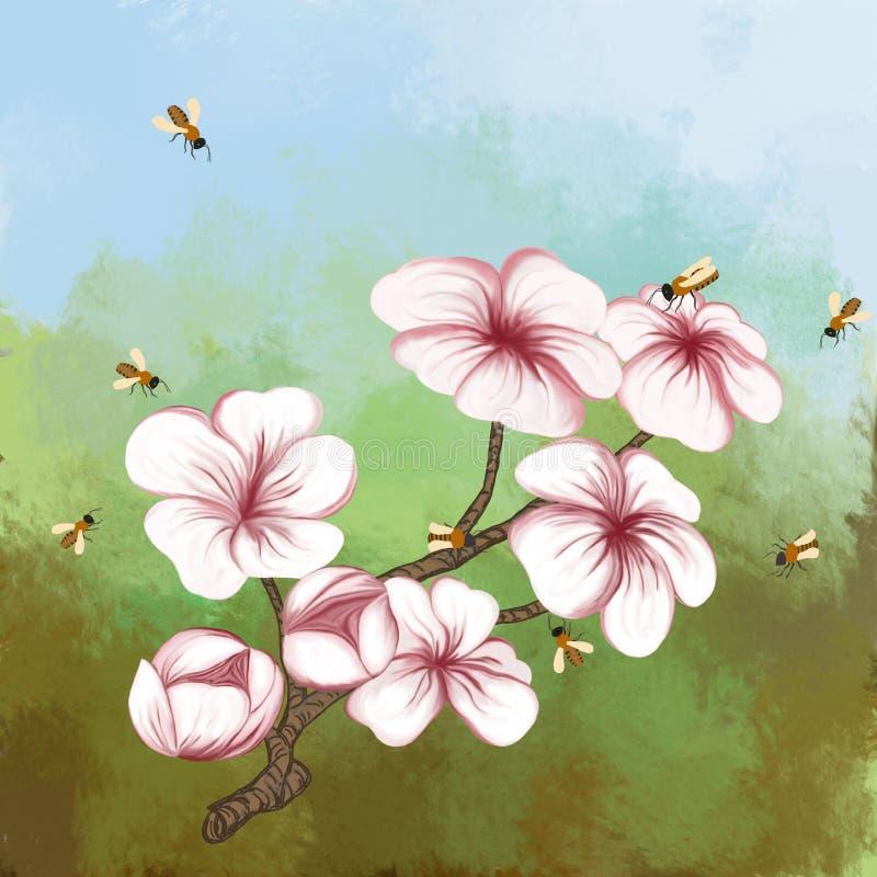 Kwiatonośnej wiśni gałąź na barwionym tle royalty ilustracja