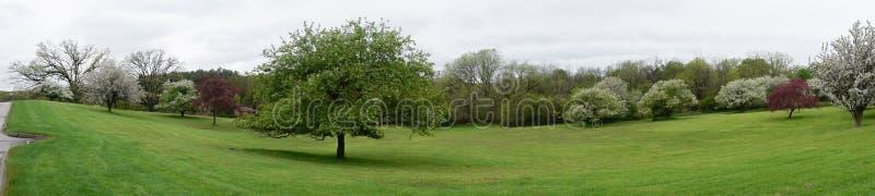 Kwiatonośni drzewa panoramy, park w Milwaukee Wisconsin fotografia royalty free