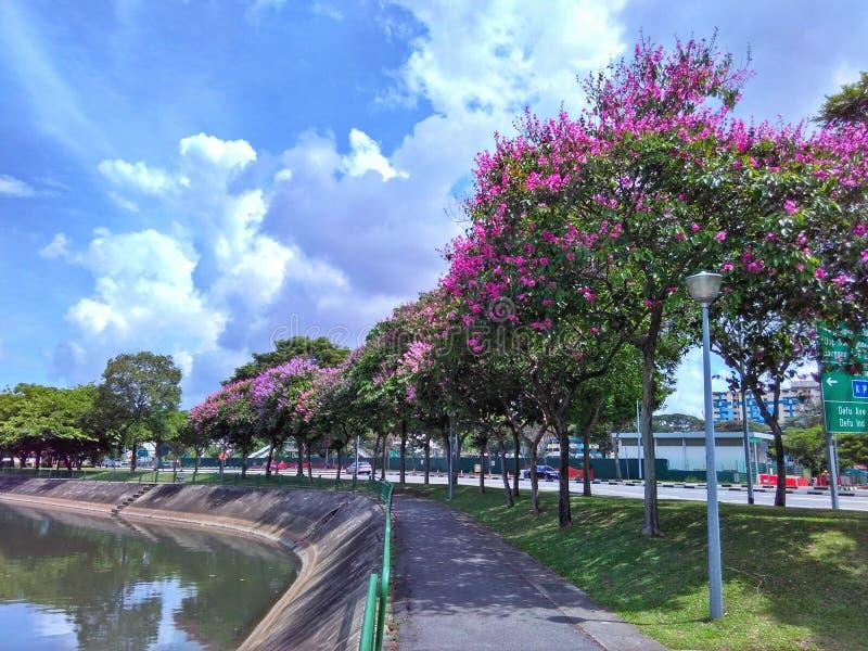 Kwiatonośni drzewa, Singapur obraz stock