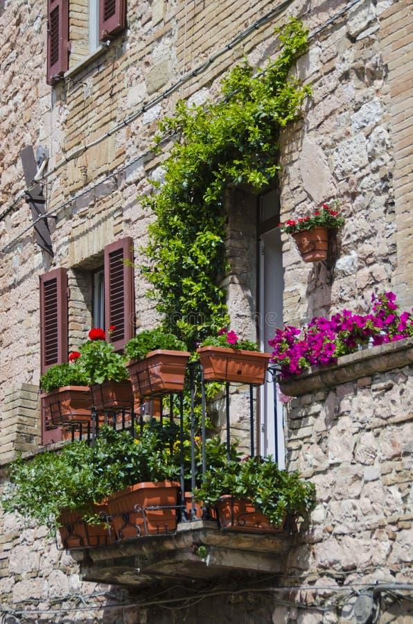Kwiatonośny balkon w Assisi, Włochy zdjęcie royalty free