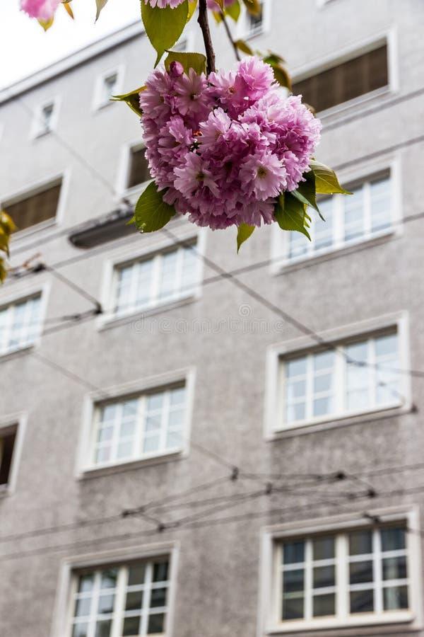 Kwiatonośny drzewo i budynek fotografia royalty free