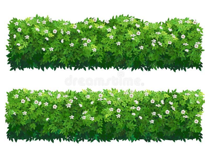 Kwiatonośny krzak zieleni żywopłot Boxwood lub poślubnika krzaki ilustracji