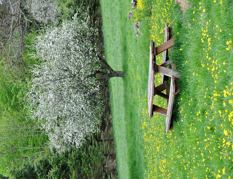 kwiatonośny pyknicznego stołu drzewo zdjęcie royalty free