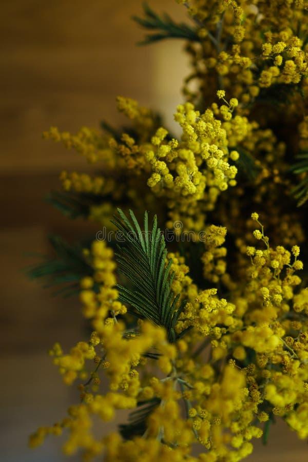 Kwiatostan żółte mimozy Ups obrazy royalty free