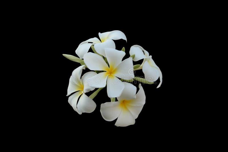 Kwiatostan biali petalled kwiaty z ? fotografia royalty free