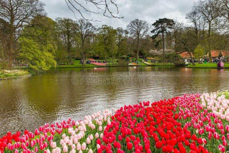 Kwiatu łóżko czerwieni i menchii tulipany w parku przy Keukenhof zdjęcia royalty free