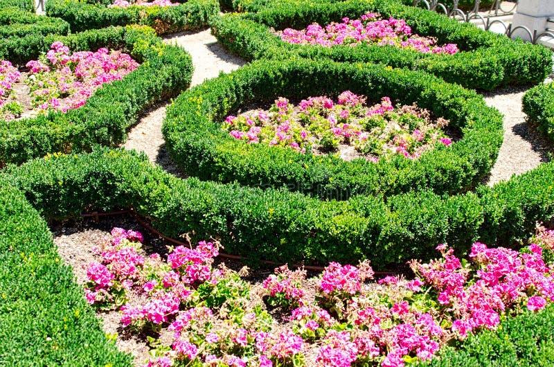 Kwiatu łóżko w lato parku zdjęcia stock