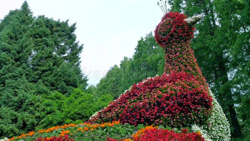 Kwiatu łóżko w postaci postaci pawich zdjęcie royalty free