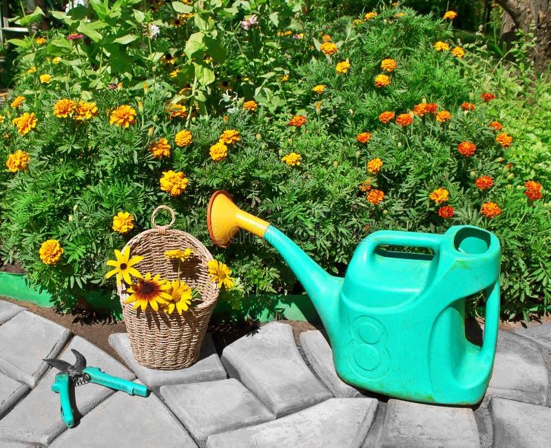 Kwiatu łóżko z nagietkami Podlewanie puszka i secateurs na b zdjęcia stock