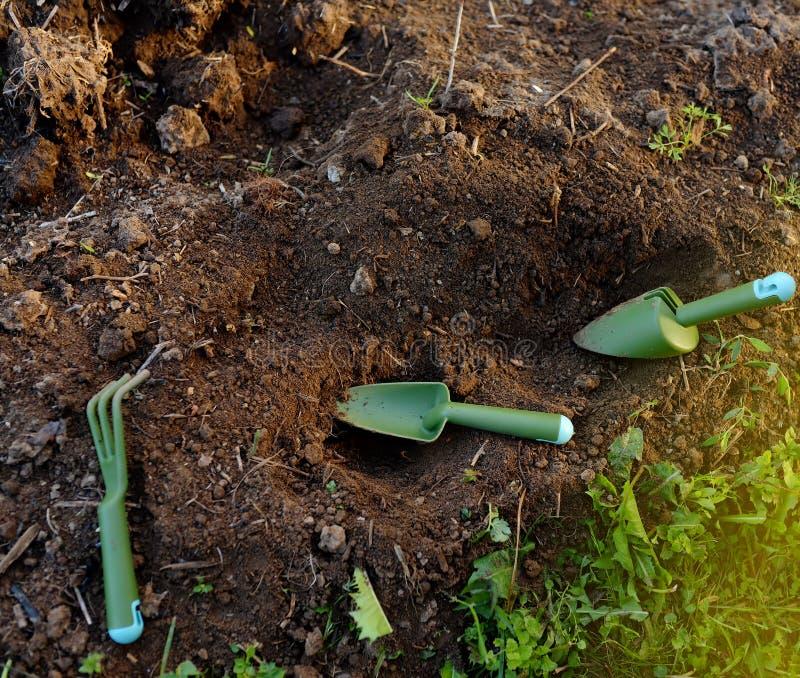 Kwiatu łóżko z ogrodowymi narzędziami w górę pogodnego letniego dnia w domu podwórko lub ogródzie dalej zdjęcie royalty free