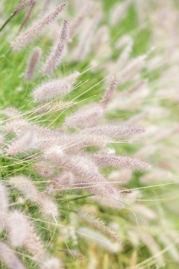 kwiatu łąki gdzieś wiosna drewna zdjęcie stock