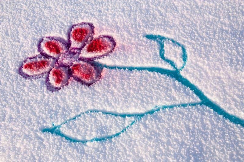 kwiatu śnieg obrazy royalty free