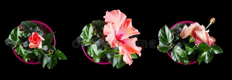 Kwiatu życia czas reżyseruje pojęcie życie ludzkie okresy zdjęcia stock