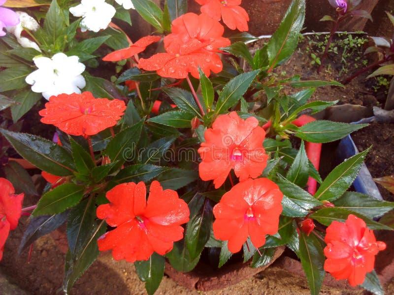 Kwiatu życie fotografia stock