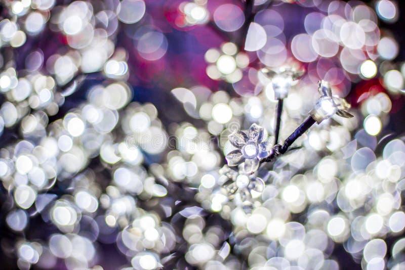Kwiatu bokeh zdjęcia royalty free