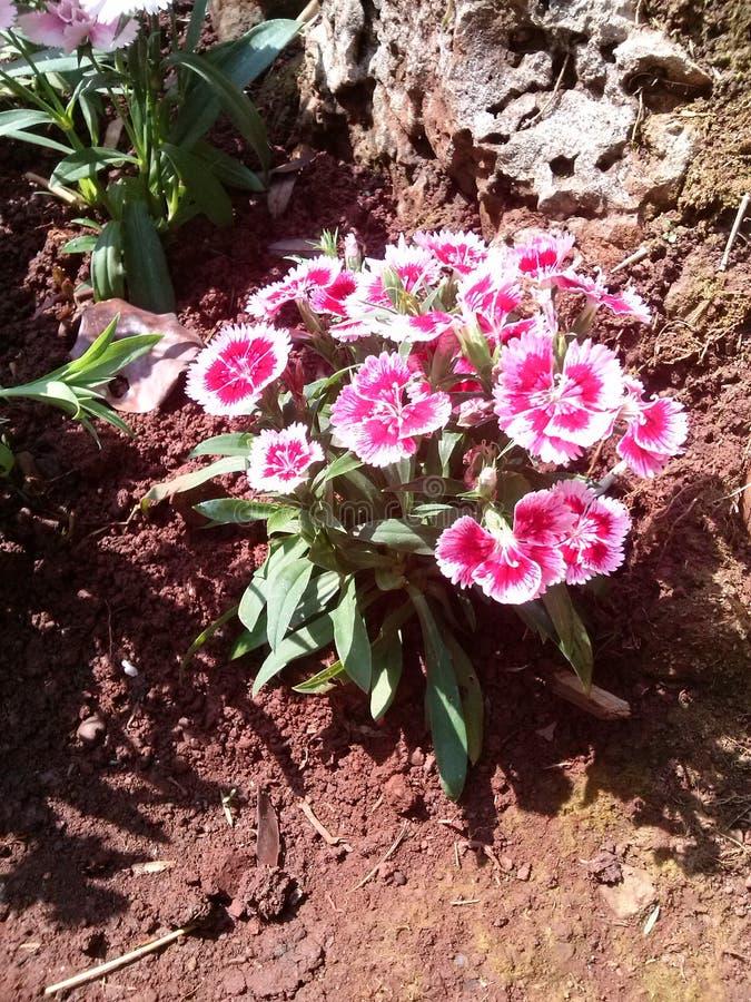 Kwiatu bufet fotografia royalty free