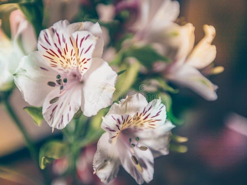 Kwiatu bukieta Biały zakończenie Indoors Tonuje fotografia stock