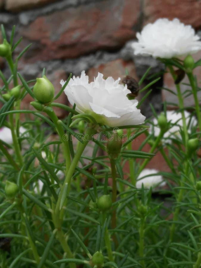 kwiatu chłodno dżdżysty fotografia stock