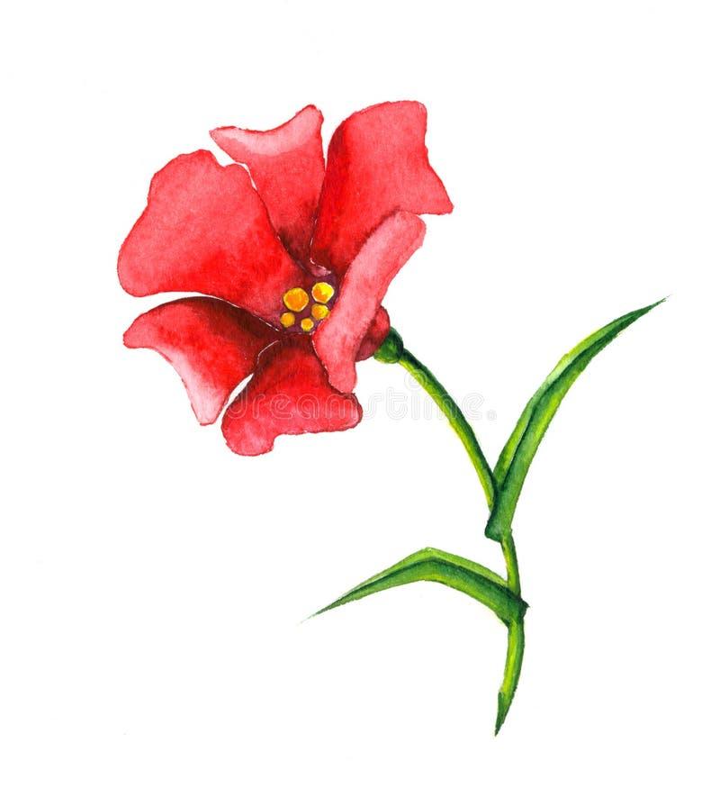 kwiatu czerwień ilustracja wektor