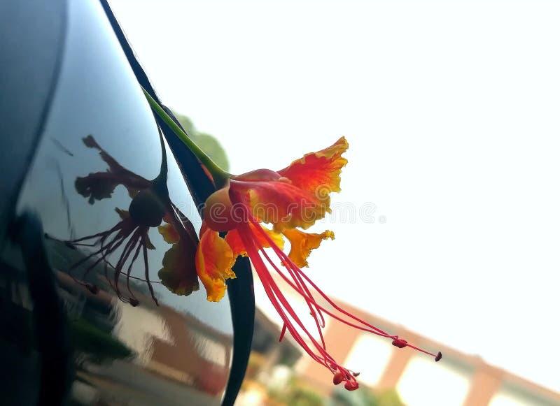 kwiatu czerwieni kolor żółty zdjęcia stock