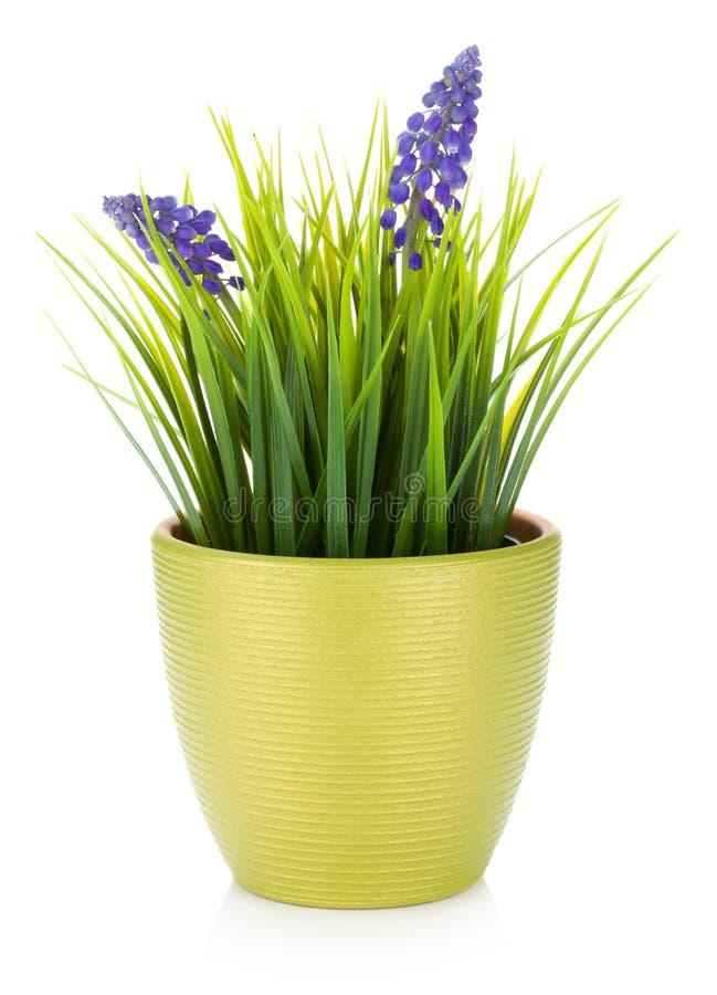 kwiatu dekoracyjny flowerpot fotografia royalty free