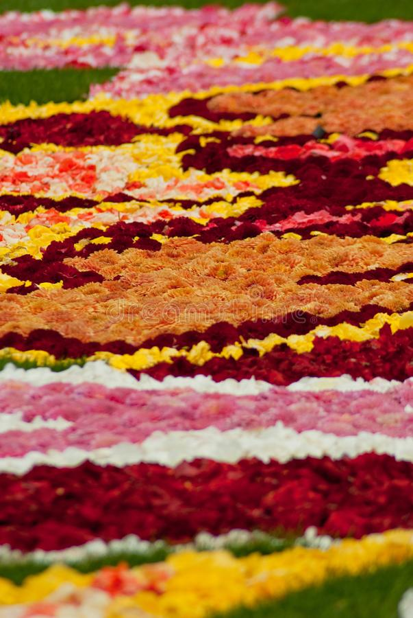 Kwiatu dywan na Grande miejscu w Bruksela zdjęcie stock