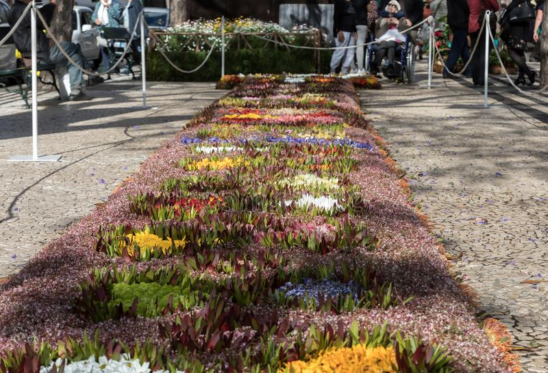 Kwiatu festiwal - sławni kwieciści dywany w centrum miasta Funchal wzdłuż środkowego deptaka Avenida Arriaga madeira zdjęcie royalty free