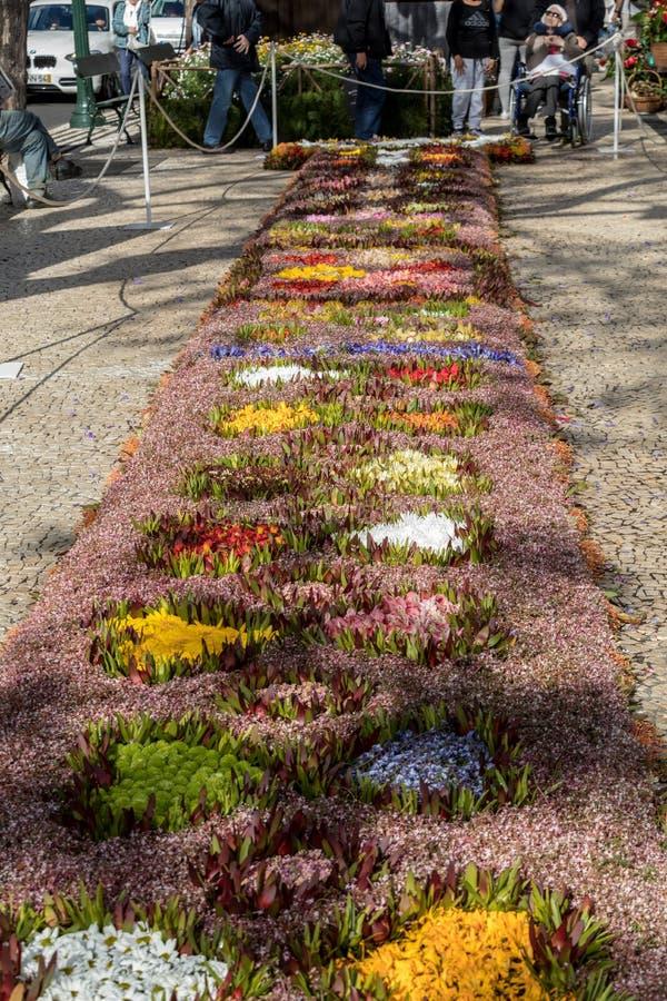 Kwiatu festiwal - sławni kwieciści dywany w centrum miasta Funchal wzdłuż środkowego deptaka Avenida Arriaga madeira obraz stock