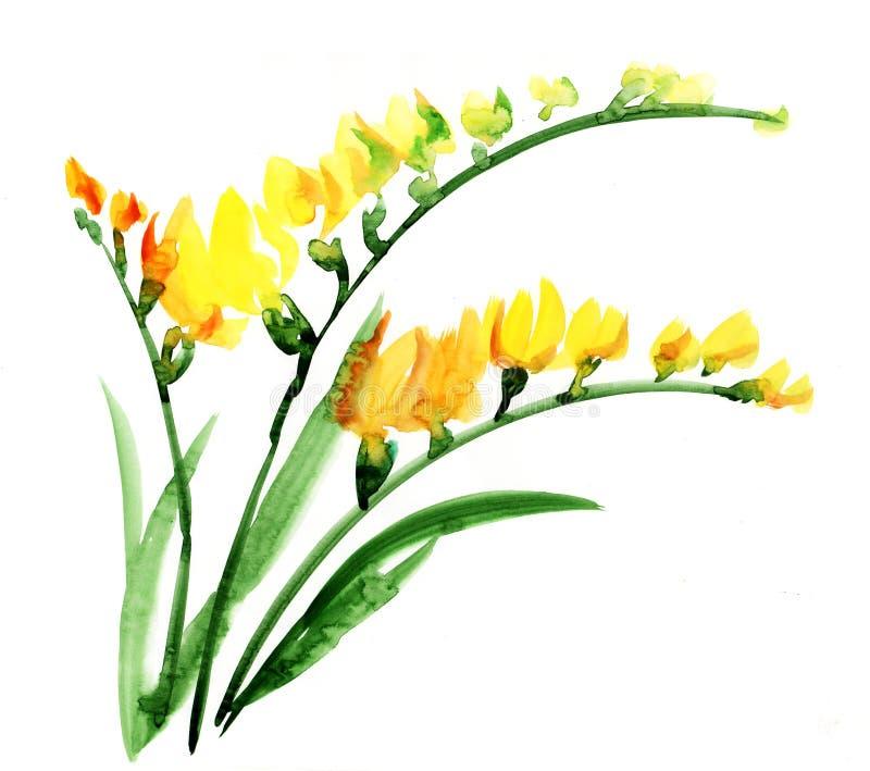 Kwiatu fresia watercolour
