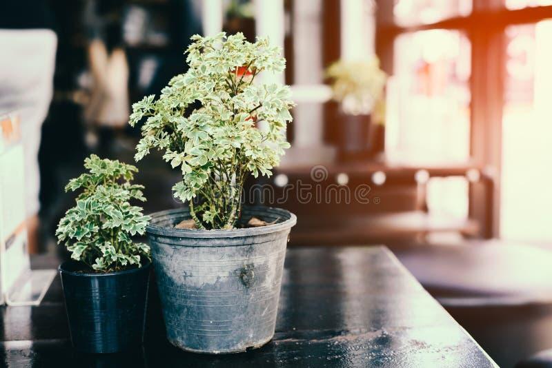 Kwiatu garnek na stole obraz royalty free