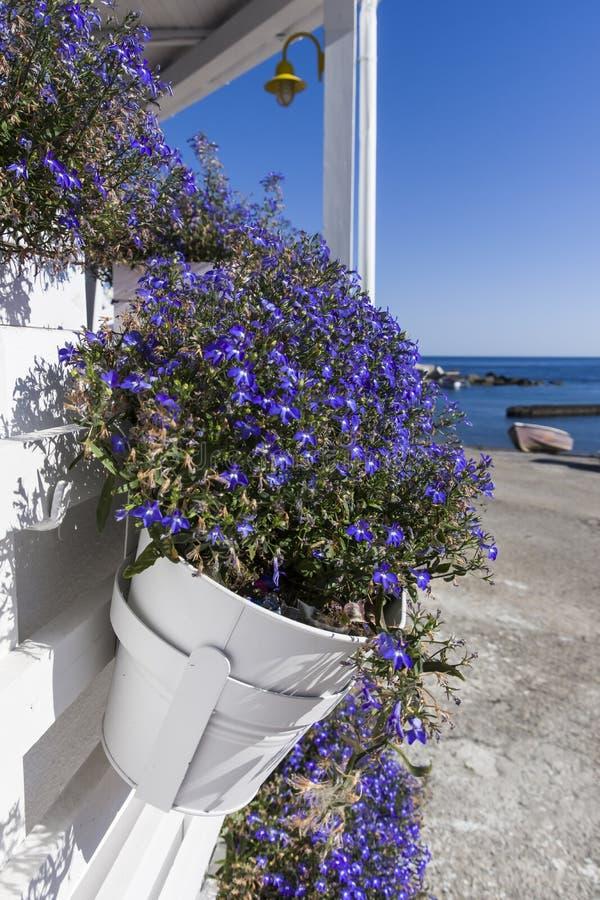 Kwiatu garnek przy Linosa starym portem fotografia stock