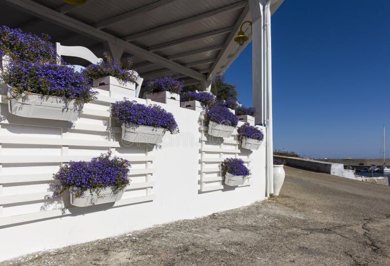 Kwiatu garnek przy Linosa starym portem zdjęcia stock