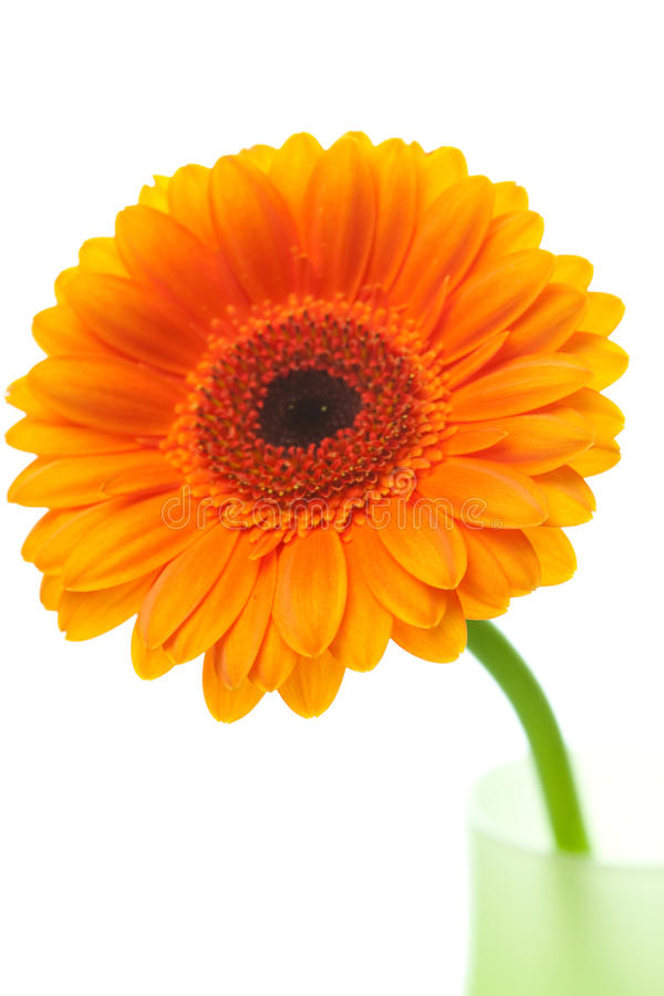 kwiatu gerbera waza zdjęcie royalty free